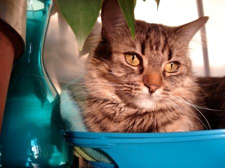 Juno dans une bowl