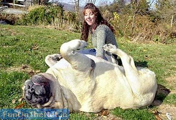World's Biggest Dog