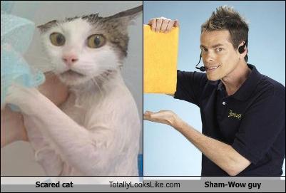 More like Sham-Meow!